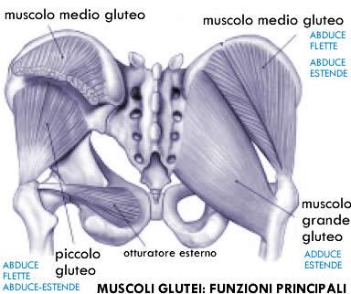 Glutei perfetti: anatomia biomeccanica ed allenamento