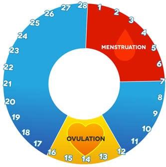 Calcolo Ovulazione