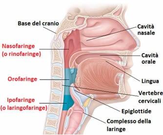 Mal di gola corpo dolori brividi e febbre. Meningite: attenti a questi segnali | Il Mattino