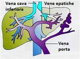 sindrome della vena cava superiore pdf
