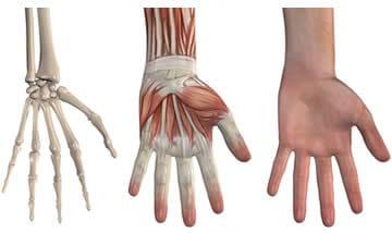 Gomito, una caduta può causare la frattura del capitello radiale