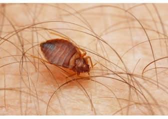 foto parassiti nelle feci umane